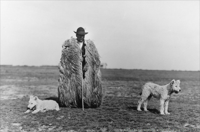 balogh shepherd